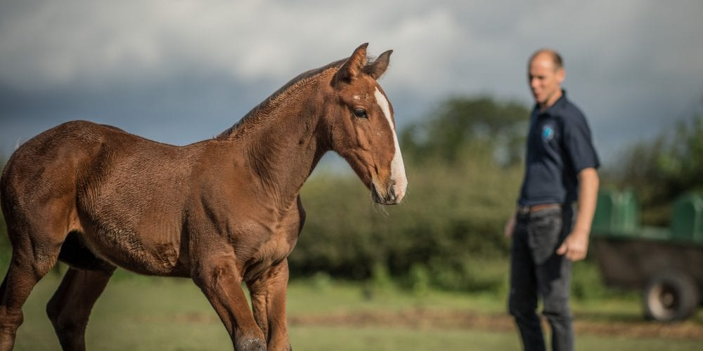 Equine vet Roger Dixon
