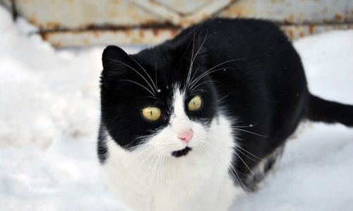 Winter dangers for cats